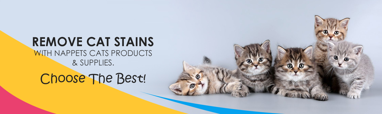 Buy Cat Products
