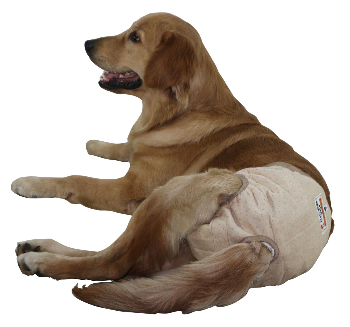 Inno Wear And Diaper For Dog 10 Extra Large Diapers Nappets