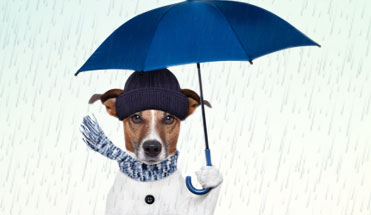 Rainy Season Pet Care Tips